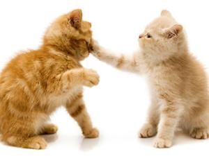 dve-mace